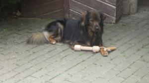 Hundewurfknochen